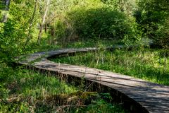 A winding wooden bridge in the forest. A forest path leading across a bridge in a dendrological park. Season of the spring stock image