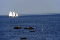 Windjammer in Penobscot Bay Royalty Free Stock Image