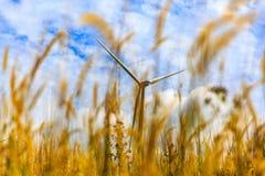 Windkraftanlage mit Grasvordergrund Stockbilder