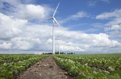 Windkraftanlagen auf dem Sojabohnengebiet am sonnigen Tag mit Wolken und Blau Lizenzfreies Stockbild