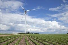 Windkraftanlagen auf dem Sojabohnengebiet am sonnigen Tag mit Wolken und Blau Lizenzfreie Stockbilder