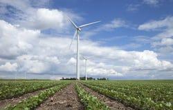 Windkraftanlagen auf dem Sojabohnengebiet am sonnigen Tag mit Wolken und Blau Stockbild