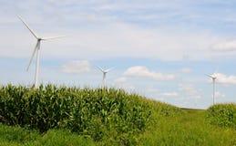 Windkraftanlagen auf einem Mais-Gebiet stockbilder