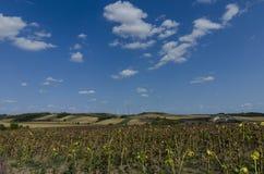 Windkraftanlagen und ein Feld von trockenen Sonnenblumen Stockfoto