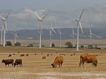 Windkraftanlagen und Landschaftsstiere Stockfotografie