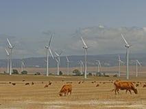 Windkraftanlagen und Landschaftsstiere Stockbild