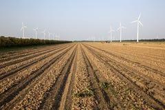 Windkraftanlagen und Zwiebelfeld in den Niederlanden Lizenzfreies Stockfoto
