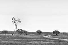Windmühle und Straße in den Wildflowers nahe Nieuwoudtville einfarbig stockfotografie