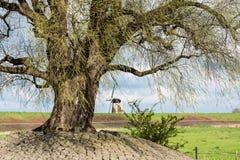 Windmühle in einer typischen niederländischen Landschaft Stockfotografie
