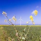 Windmühle und Rapsanlage Lizenzfreies Stockfoto