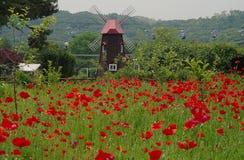 Windmühle und rotes Mohnblumenfeld, Südkorea Lizenzfreies Stockfoto