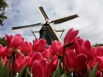 Windmühle und Tulpen Lizenzfreies Stockfoto