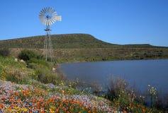 Windmühle zwischen Blumen Stockfotos