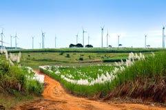 Windmühlen-Bauernhof und Zuckerrohr-Felder Stockfotos