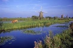 Windmühlen bei Kinderdijk Stockbild