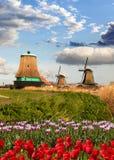 Windmühlen in Holland mit Tulpen stockbild