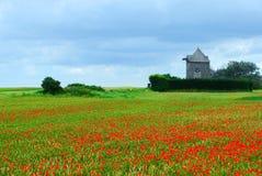 Windmühlen- und Mohnblumefeld Stockfoto