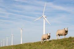 Windmühlen und Schafe in den Niederlanden Stockbild