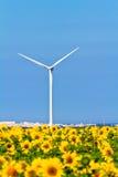 Windmühlen und Sonnenblumen Lizenzfreies Stockfoto