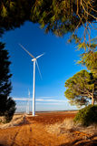 Windmühlen und Sonnenblumen Lizenzfreie Stockfotografie