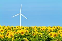 Windmühlen und Sonnenblumen Stockbild