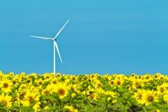 Windmühlen und Sonnenblumen Stockfotografie