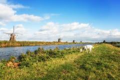 Windmühlen und Ziege Lizenzfreies Stockbild