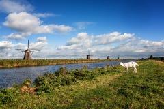 Windmühlen und Ziege Lizenzfreie Stockfotografie