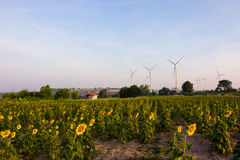 Windmühlenbauernhof und Sonnenblumenland Lizenzfreies Stockfoto