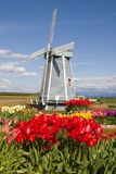 Windmill. In the tulip fields royalty free stock photos