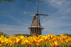 Free Windmill And Tulips Royalty Free Stock Image - 12399046