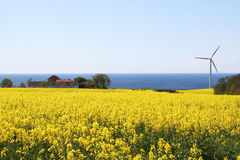 Windmill anda rape field Stock Photography