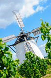Windmill behind grape vine stock images