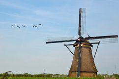 Windmill and bird Royalty Free Stock Image