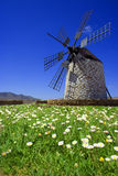 Windmill blue. Windmill over a idyllic field of daisies royalty free stock photography