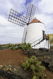 Windmill in Cactus Garden in Lanzarote Royalty Free Stock Photos