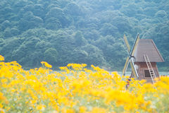 Windmill and chrysanthemum field Royalty Free Stock Image
