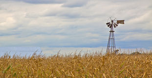 Windmill corn field Royalty Free Stock Photo