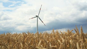 Windmill in cornfield stock footage