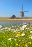 Windmill at Dutch island Texel. Windmill and wild flowers at Dutch wadden island Texel with focus on flowers royalty free stock photography
