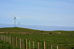 Windmill farm. And a big farmland with lots cow Stock Image