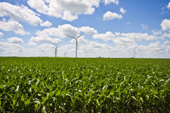 Windmill Farm and Cornfields Stock Image