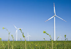 Windmill farm in green field Royalty Free Stock Photo