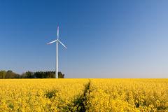 Windmill  farm in the rape field Stock Image