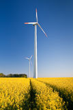 Windmill  farm in the field Royalty Free Stock Photo
