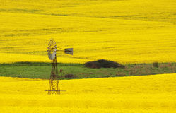 Windmill in a field of Canola Royalty Free Stock Image