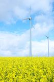 Windmill on Field of Gold Stock Images
