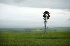Windmill in field. Single windmill in a field of canola Stock Images