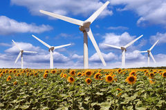 Windmill in a field of sunflowers Stock Photos