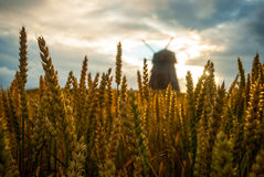 Windmill in the field in sunset Royalty Free Stock Photo